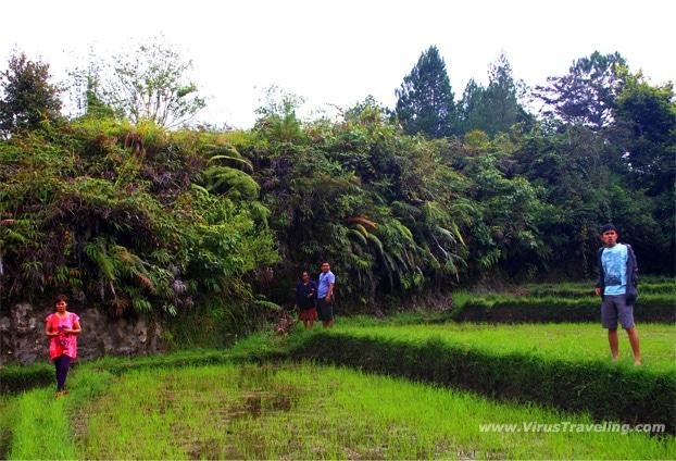Pagi-pagi melihat ladang dan pematang sawah