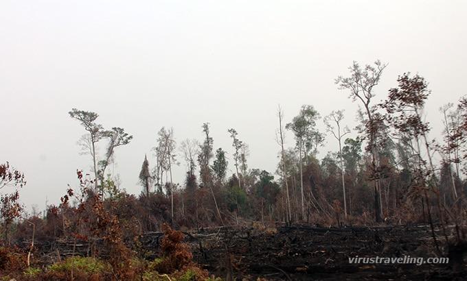 pembakaran-hutan-kalimantan