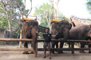 Visit Bali Zoo